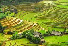 Ricefält i berg av Sapa   Arkivfoto