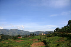 Ricefält i Uganda, Afrika Arkivfoto