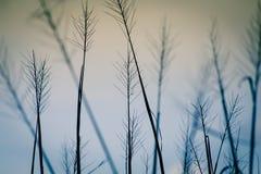 Ricefält på solnedgången arkivbild