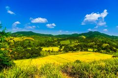 Ricefield和山由清莱环境美化在泰国 图库摄影