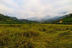 Ricefield在越南 库存照片