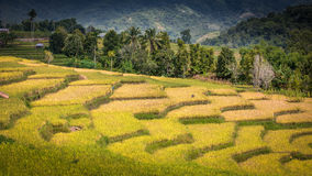 Ricefield με τα βουνά Στοκ εικόνες με δικαίωμα ελεύθερης χρήσης