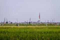 Ricefield Стоковые Изображения