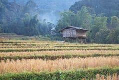 Ricefield Fotos de archivo