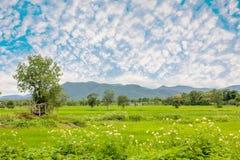 Ricefield Fotografering för Bildbyråer