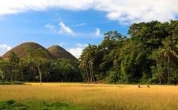 Ricefield Arkivbilder