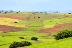 Ricefield in Birma Myanmar Stockbilder