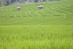 Ricefield del Bali Fotografia Stock Libera da Diritti