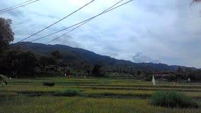 Ricefield indonésio foto de stock royalty free