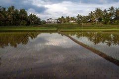 Ricefield nära Ubud Fotografering för Bildbyråer