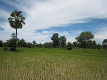 Ricefield in Nong Khiaw Laos stock foto's