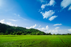 Ricefield och kulle Royaltyfri Fotografi