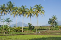 与背景天空蔚蓝和山的树椰子 免版税库存照片