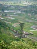 Ricefield w Bali z wodą zdjęcia royalty free