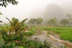Ricefields和石灰石山在清早 库存图片