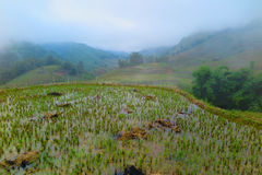 Ricefields在Sapa,越南 免版税库存照片