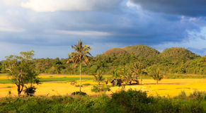 Ricefields μεταξύ των λόφων Chocolat Στοκ Εικόνα