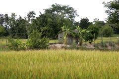 Ricefields Таиланд wirh ландшафта стоковые изображения