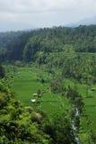 Ricefields avec un petit fleuve image stock