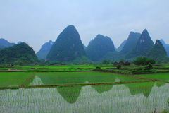 The Ricefields of China Stock Image