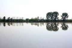Ricefields e riflessioni, Lomellina, Italia Immagine Stock Libera da Diritti