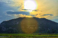 Ricefields, the Hill and the Sun in the Afternoon royalty free stock images