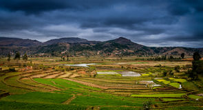Ricefields of Madagascar Royalty Free Stock Image