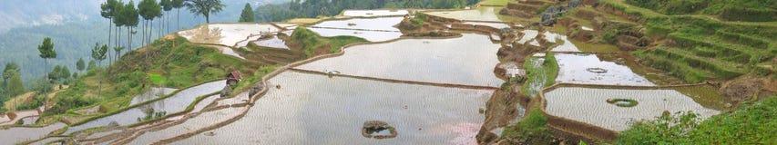 Ricefields muy grandes de la visión fotos de archivo libres de regalías