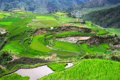 Ricefields in Philippinen lizenzfreies stockfoto