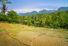 Ricefields of Sumatra stock image
