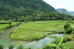 Ricefields in Vietnam Stockfotos