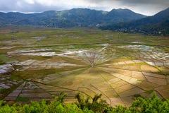 Ricefields ö Flores, Indonesien Arkivbilder