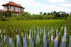 Ricefält Royaltyfri Bild