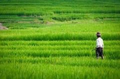 Ricemomentterrass i Vietnam Arkivbilder
