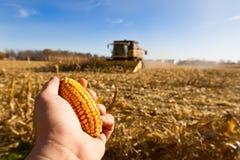 Ricerca del cereale Fotografie Stock
