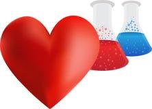 Ricerca del cuore cardiovascolare Fotografie Stock