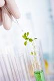 Ricerca del prodotto chimico della pianta Fotografia Stock