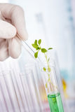 Ricerca del prodotto chimico della pianta Fotografie Stock Libere da Diritti