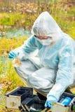 Ricerca idrica durante l'epidemia dei virus pericolosi, il lavoro dell'ecologo fotografia stock libera da diritti