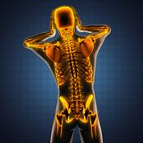Ricerca umana della radiografia con le ossa d'ardore Fotografia Stock