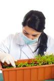 Ricercatore agricolo che controlla le nuove piante Fotografia Stock Libera da Diritti