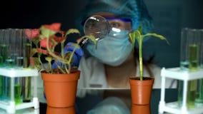 Ricercatore che analizza le piante con la lente d'ingrandimento, sviluppo dell'insetticida fotografia stock libera da diritti