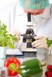 Ricercatore con la verdura del GMO Fotografie Stock