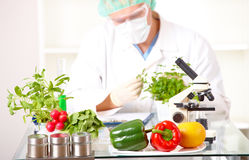 Ricercatore con le piante del GMO in laboratorio Immagini Stock