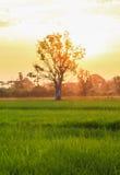 Rices uprawiają ziemię widok Obrazy Royalty Free