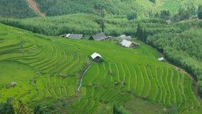 ricesapaen terrasserar dalen vietnam royaltyfria bilder