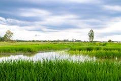 Riceslantgårdsikt Arkivbild