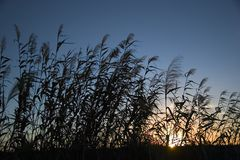 ricesolnedgång Royaltyfri Bild