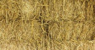 Ricestraw背景 库存照片