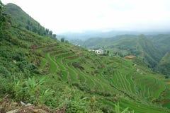 riceterrass Arkivfoto